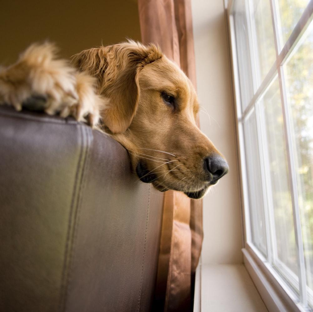 лысый картинки ждущих собак значит это, что