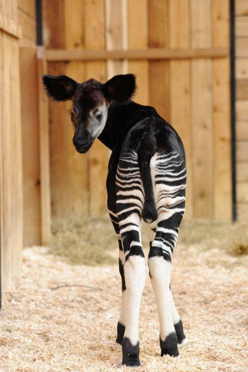 These Adorable Animal Backsides Will Make You Smile