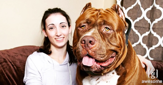 Meet Hulk, The World's Largest Pit Bull Puppy With a Heart of Gold