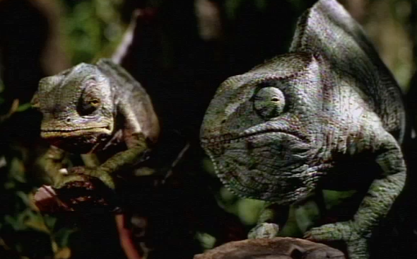 22 Classic Beer And Alcohol Commercials Lizards Sell Beer Guff