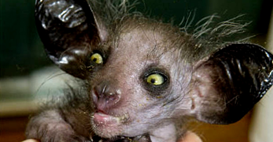 These real animals are straight from your nightmares - Chauve souri vampire ...