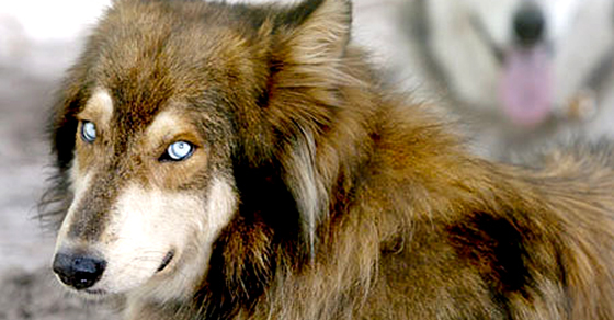Beyond Coywolves: Striking Animal Hybrids and Species You Didn't Know About