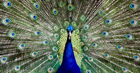 Some Of The Most Gorgeously Colorful Animals On Earth