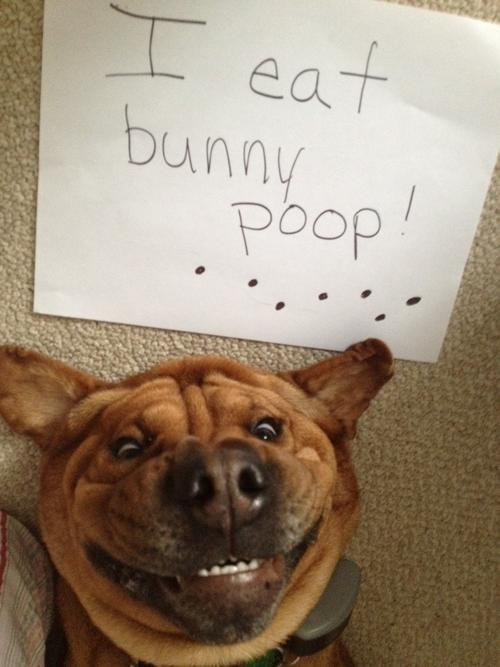 Hilariously Adorable Dog Shaming Pictures Bunny Poop Guff