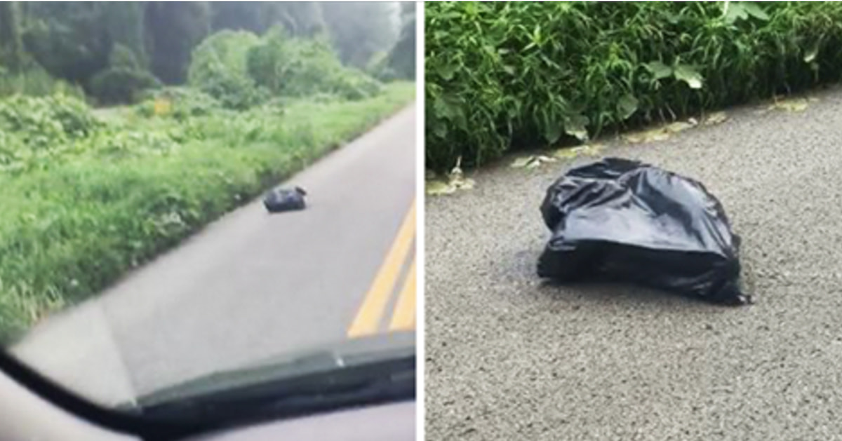 This Woman Saw A Moving Garbage Bag On The Road And Ended Up With A New Best Friend - Did That Garbage Bag Just Move? | Guff & This Woman Saw A Moving Garbage Bag On The Road And Ended Up With ...