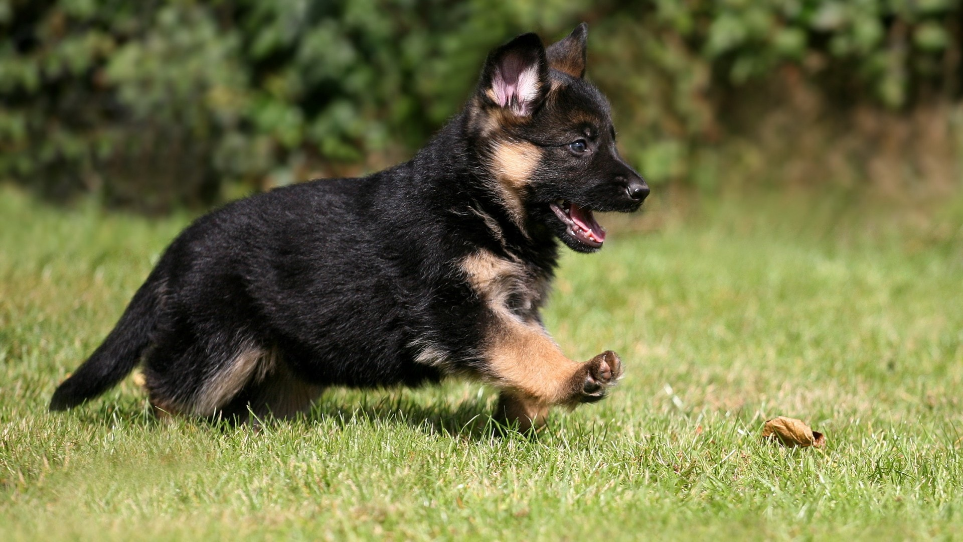 13 Adorable K 9 Puppies In Training That Are Too Cute To Be