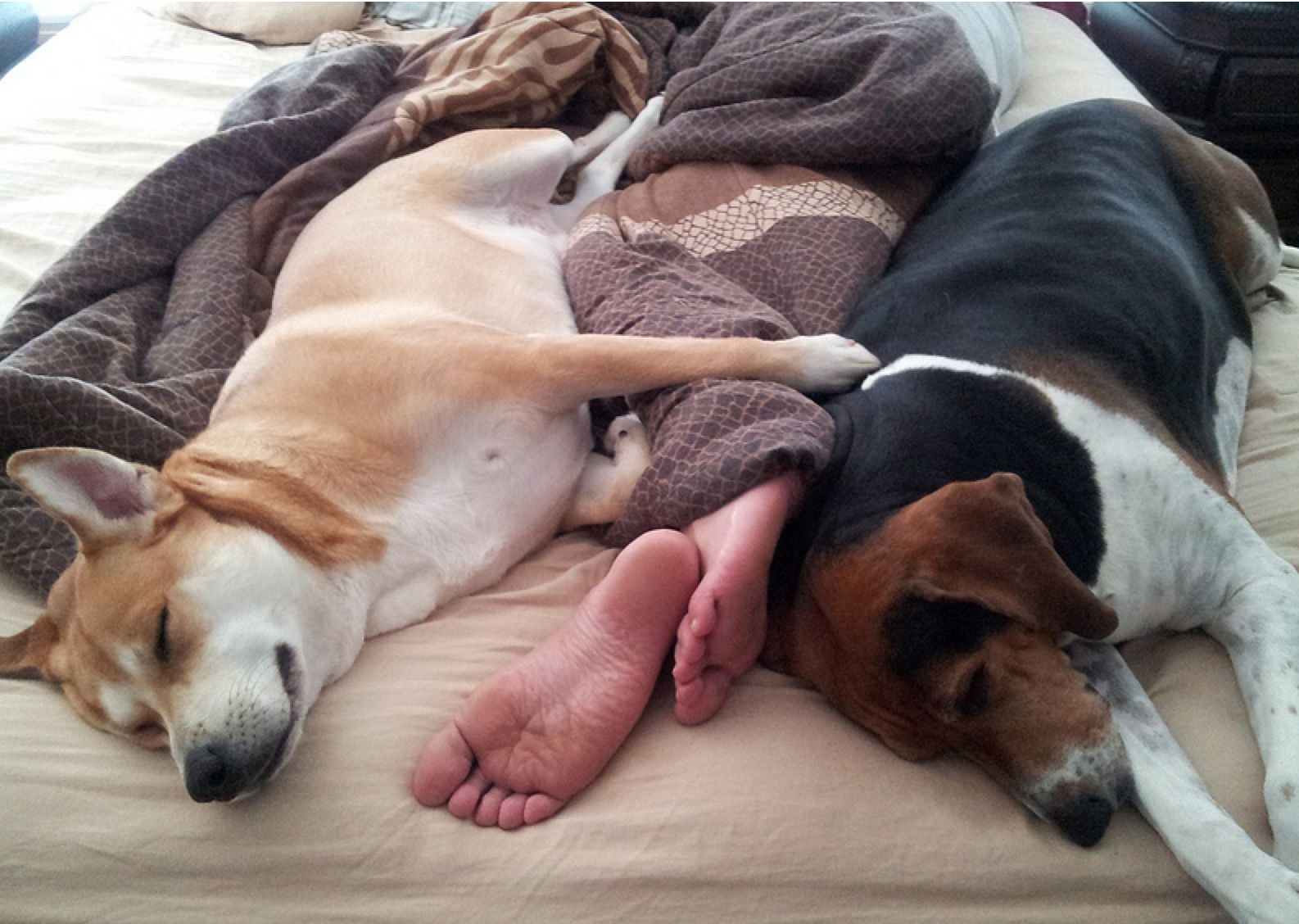 The Science Behind Why Dogs Cuddle