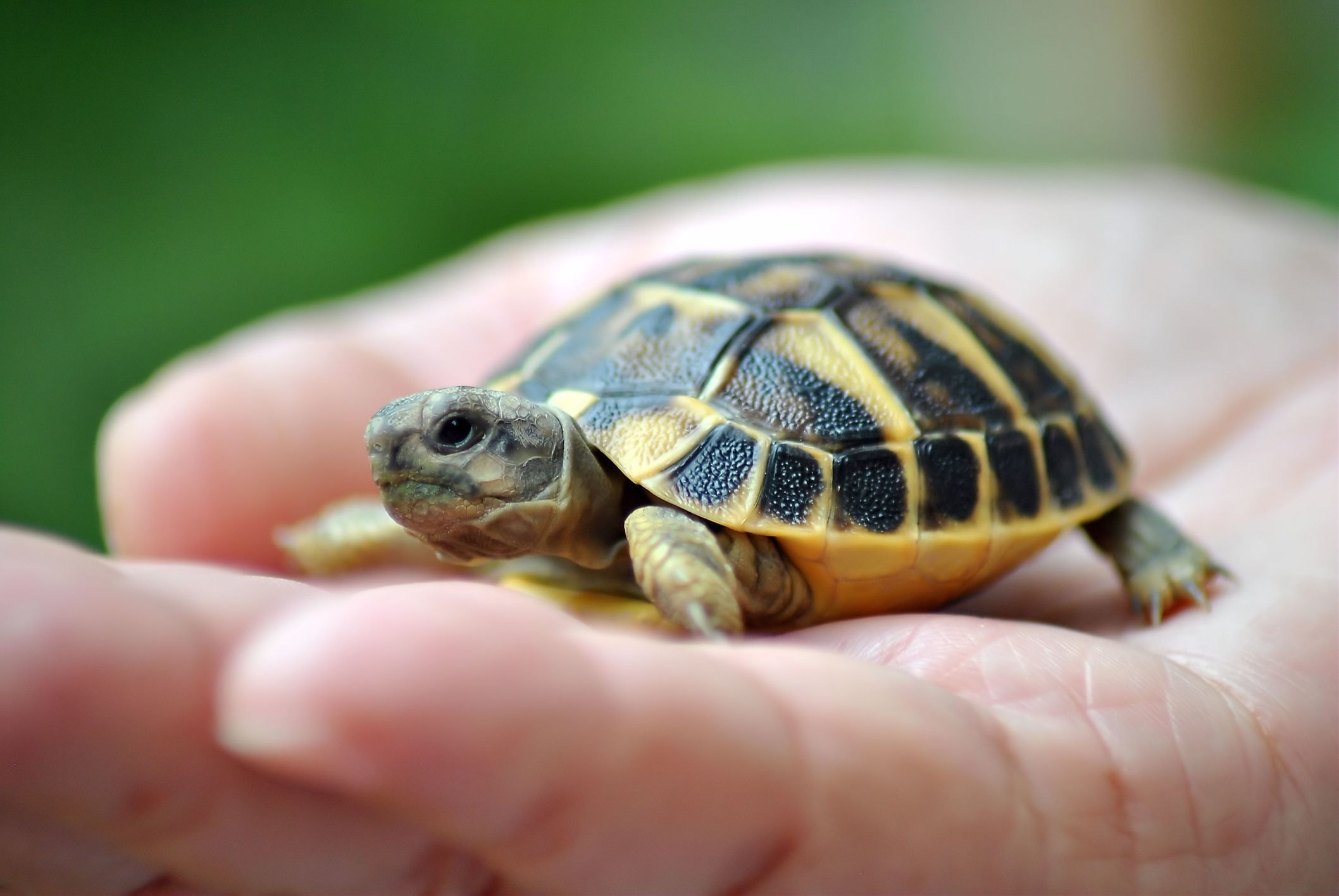 Here S Why You Should Never Adopt A Pet Turtle Getting A Pet Guff