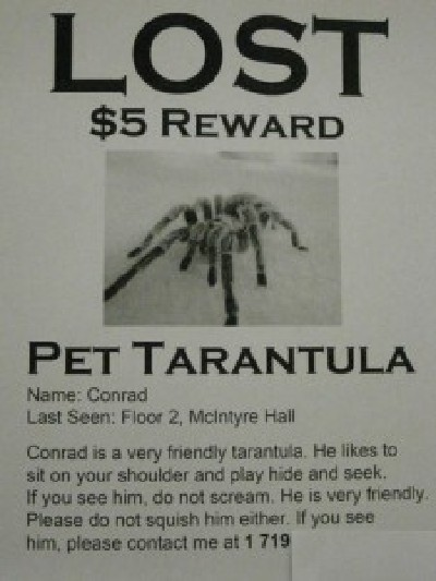 Funny Missing Pet Signs Awesome Kitty