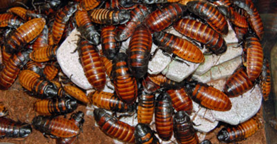 Who Needs Children When You Can Have 100,000 Cockroaches ...