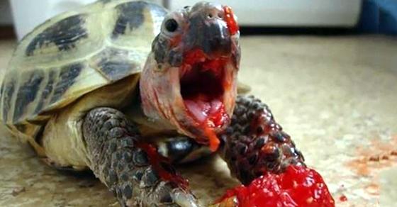 15 Hilarious Yet Horrifying Pics of Animals Eating Berries