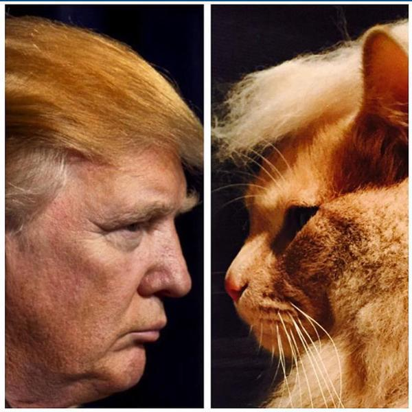 This Is What Happens When You Trump Your Cat Face Off Memes