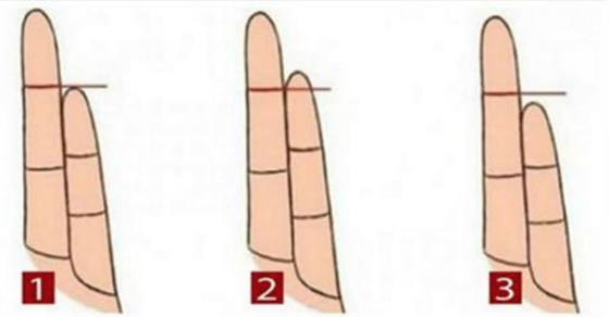 finger length and penis size