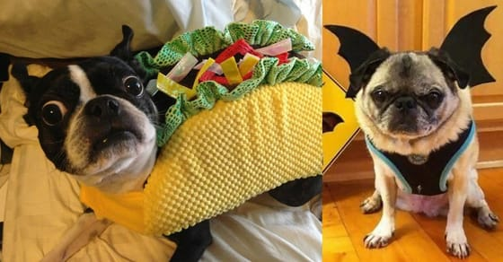 Here's Proof That Pets Totally Hate It When Their Owners Dress Them Up