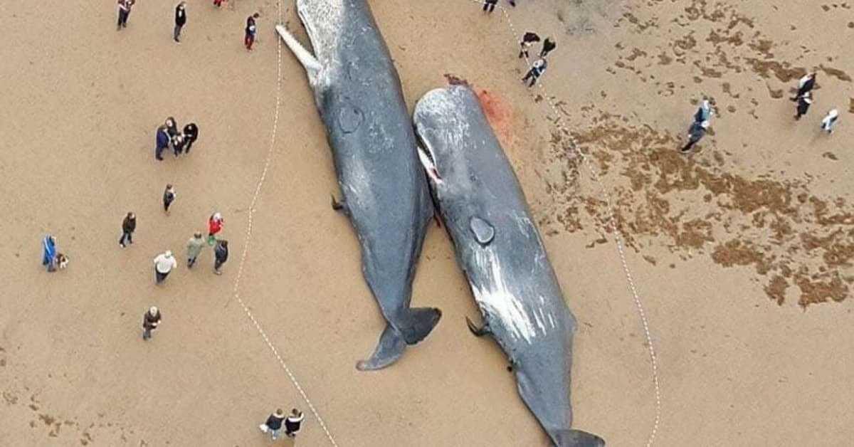 What Was Found Inside The Stomachs of These Dead Whales Is Incredibly Sad
